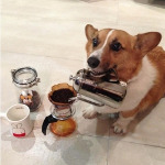 can my dog drink coffee?