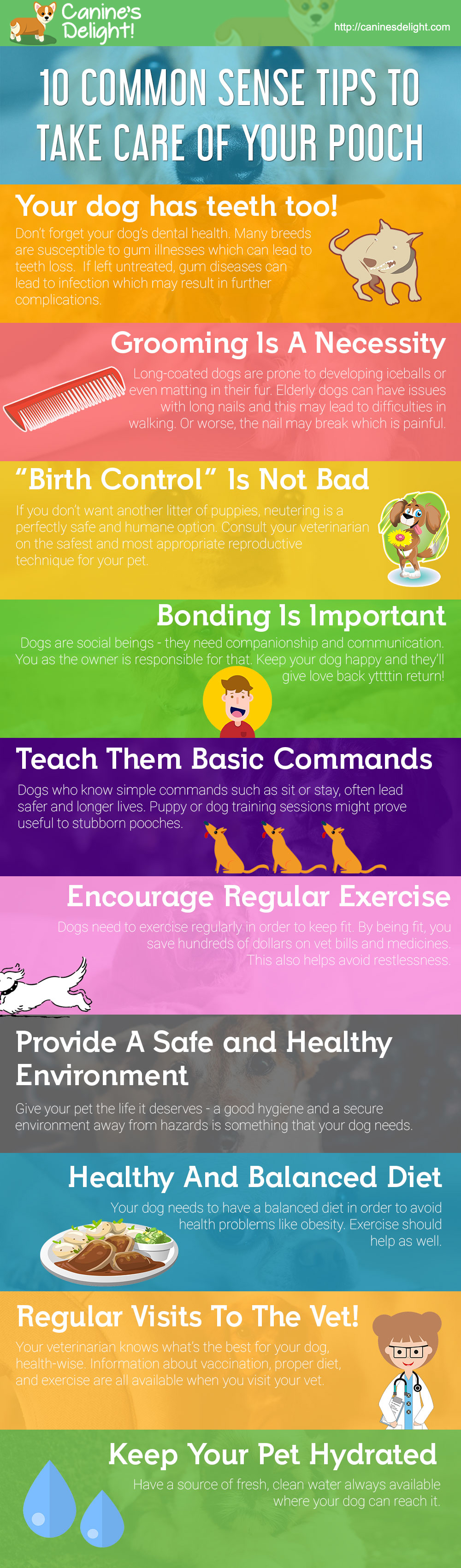 10 common sense tips to take care of your dog